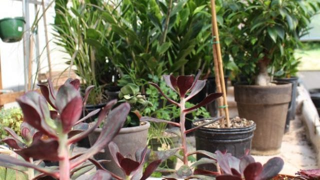 Kalamazoo tropical plants and rentals