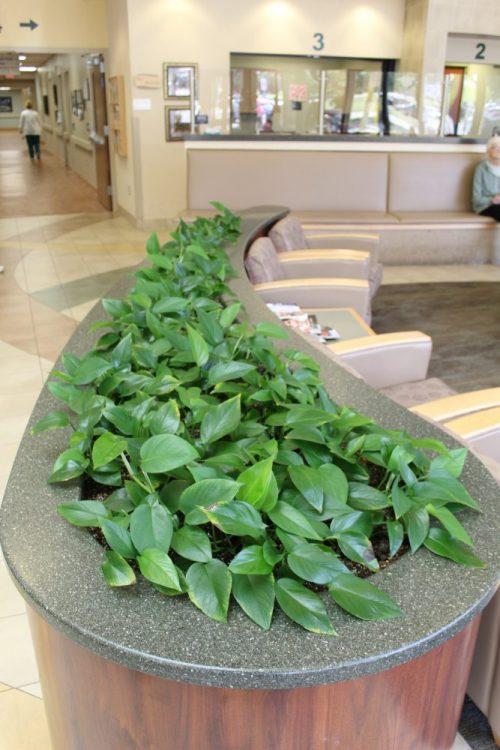 hospital planter